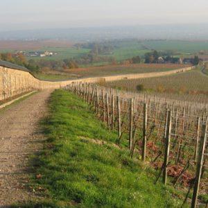 historische Weinanlage Steinberg bei Eltville